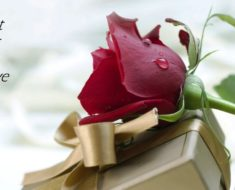 Rose Day 2017 Wishes, Messages, Quotes & SMS